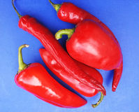 Poivron rouge sur le fond bleu Image stock