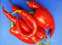 Poivron rouge sur le fond bleu Image libre de droits