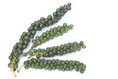 Poivron vert Photographie stock libre de droits