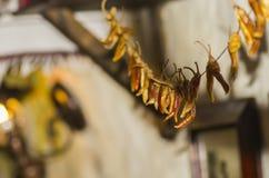 Poivrons chauds à disposition Photo stock