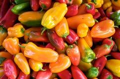 Poivrons chauds colorés Photographie stock libre de droits