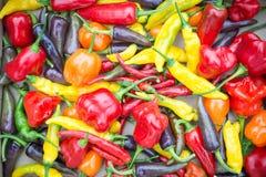 Poivrons colorés mélangés et Chillis Image libre de droits