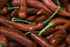Poivrons de Cayenne Image stock