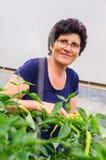 Poivrons de cueillette de femme de jardin Photos libres de droits