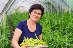 Poivrons de cueillette de femme de jardin Photographie stock libre de droits