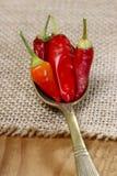 Poivrons de piment d'un rouge ardent Photos stock