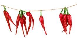 Poivrons de piment d'un rouge ardent accrochant sur trois cordes d'isolement sur W Photos stock
