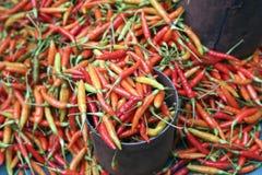 Poivrons de piment d'un rouge ardent frais Photos stock