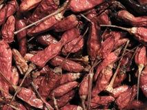 Poivrons de piment secs d'un rouge ardent Images libres de droits