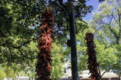 Poivrons de piments sur la plaza image libre de droits