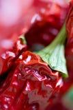 Poivrons de /poivron d'un rouge ardent Photographie stock