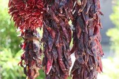Poivrons de /poivron d'un rouge ardent photo stock