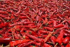 Poivrons de /poivron d'un rouge ardent séchés au soleil Photographie stock libre de droits