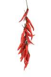 Poivrons de /poivron d'un rouge ardent secs Image libre de droits