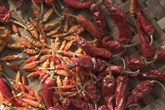 Poivrons de /poivron rouge secs Photo stock