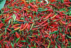 Poivrons de /poivron rouges et verts Photo libre de droits