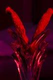 Poivrons et vase rouges de Cili Photographie stock libre de droits