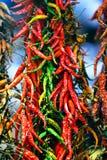 Poivrons frais verts rouges chauds Photographie stock libre de droits