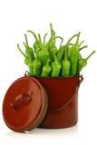 Poivrons récemment récoltés de jalapeno Photo stock