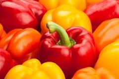 Poivrons, rouge, jaune, orange, verte Photographie stock