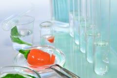 Poivrons rouges de essai pour la contamination avec des pesticides Image stock