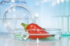 Poivrons rouges de essai pour la contamination avec des pesticides Photos libres de droits
