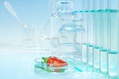 Poivrons rouges de essai pour la contamination chimique Photographie stock libre de droits