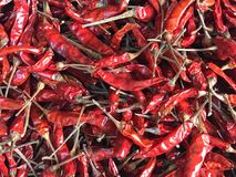 Poivrons rouges secs ou chillis rouges Images stock
