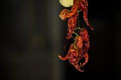 Poivrons secs par rouge Photographie stock