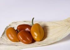 4 poivrons sur une cosse de maïs Images stock