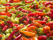 Poivrons végétaux colorés Image libre de droits