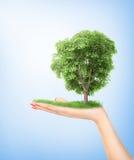 pojęcia eco pokoju gołębie Ręka trzyma dużego drzewa natura zdjęcie royalty free