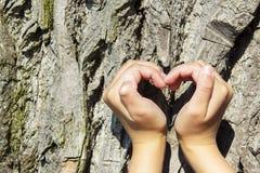 pojęcia ekologii żeńskich wielkich ręk kierowy robi kształt drzewny bagażnik Obrazy Stock