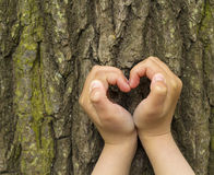 pojęcia ekologii żeńskich wielkich ręk kierowy robi kształt drzewny bagażnik Obraz Royalty Free