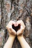 pojęcia ekologii żeńskich wielkich ręk kierowy robi kształt drzewny bagażnik Zdjęcie Royalty Free