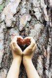 pojęcia ekologii żeńskich wielkich ręk kierowy robi kształt drzewny bagażnik Obraz Stock