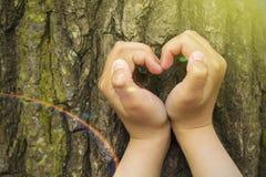 pojęcia ekologii żeńskich wielkich ręk kierowy robi kształt drzewny bagażnik Zdjęcia Stock