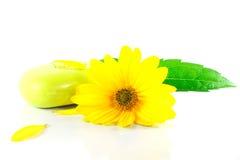 pojęcia kwiatu zieleni urlop zupny zdroju kolor żółty obrazy royalty free