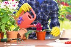 pojęcia ogrodnictwo Zasadzać kwitnie na ogródzie Zdjęcie Stock