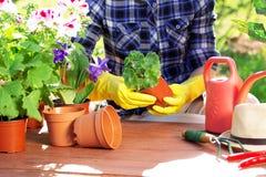 pojęcia ogrodnictwo Zasadzać kwitnie na ogródzie Fotografia Stock