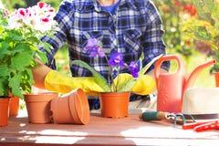 pojęcia ogrodnictwo Zasadzać kwitnie na ogródzie Zdjęcia Stock
