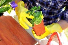 pojęcia ogrodnictwo Zasadzać kwitnie na ogródzie Obraz Stock