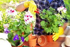 pojęcia ogrodnictwo Zasadzać kwitnie na ogródzie zdjęcie royalty free