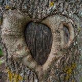 pojęcia serca odosobniony miłości drzewa biel Obraz Stock