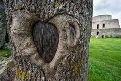 pojęcia serca odosobniony miłości drzewa biel Zdjęcie Stock