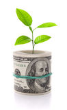 pojęcia wzrostowego wizerunku odosobniony pieniądze biel Zdjęcie Stock