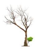 Pojęcie śmierć i życia odrodzenie. zdjęcia stock