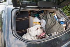 Pojęcie żadny porzucenie zwierzęta poprawny zachowanie podczas wakacji letnich i Zdjęcie Stock