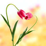 pojęcie abstrakcjonistyczny kwiat Obraz Stock