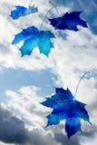 Pojęcie błękitnego abstrakcjonistycznego klonu spada liście na błękit chmury nieba bac Obrazy Royalty Free